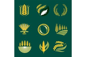 Cereal ears and grains agriculture industry or logo badge design vector food illustration organic natural symbol