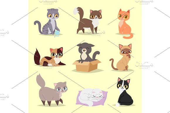 Cute Cats Kitty Pet Adorable Character Different Pose Vector Home Cats Different Breeds