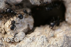 Macro shot of ants.