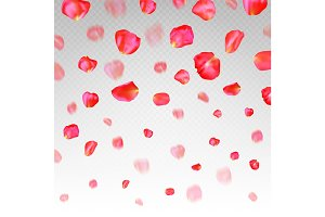 A lot of falling red rose petals on transparent background.