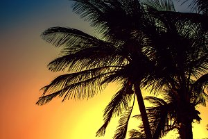 Silhouettes of palm trees, photo in a sunset