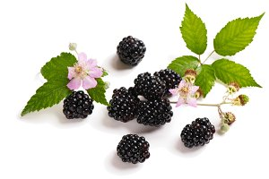 Blackberry on the twig and flower