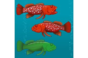 Common Harlequin Fish. Vector illustration