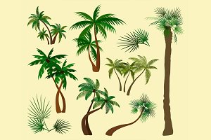 Palms trees collection