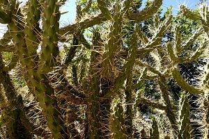 Cactus in the city garden