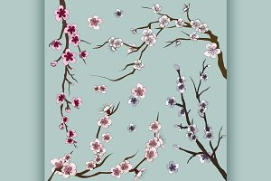 Set of sakura japan cherry