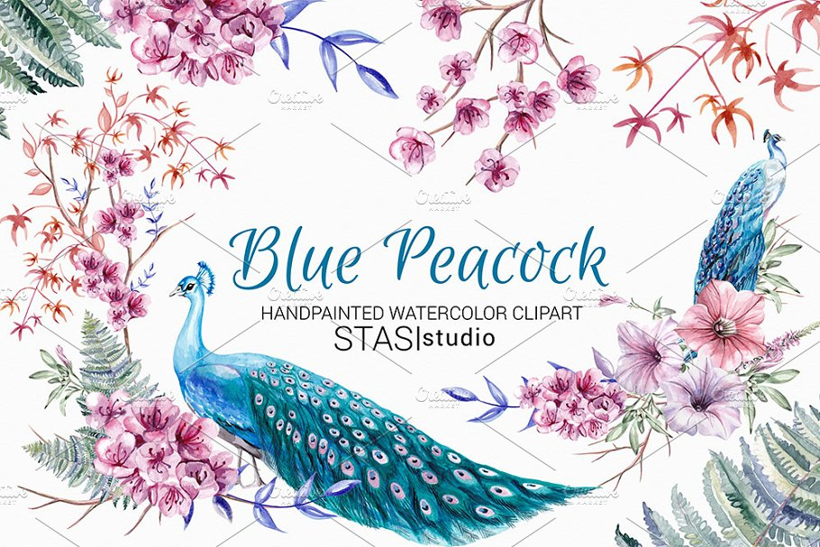 Blue Peacock Watercolor Clipart in Illustrations - product preview 8