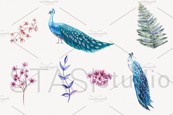 Blue Peacock Watercolor Clipart in Illustrations - product preview 1