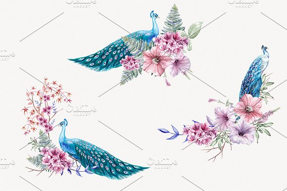 Blue Peacock Watercolor Clipart in Illustrations - product preview 2