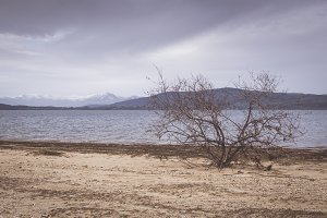 Dry shrubs in a lake shore