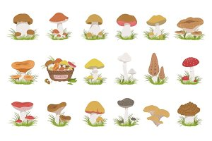Eatable Mushrooms Realistic Drawings Set