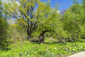 Spring in the Botanical Garden.