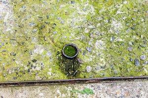 Moss Concrete Background