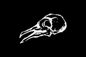 Pigeon dove bird skull sketch vector
