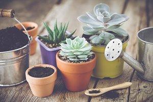Planting and care of succulents