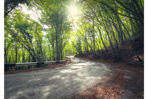 Colorful green forest with asphalt mountain road