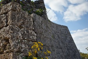 Yellow Flowers on the Castle Wall