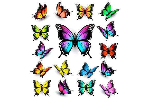 Colorful Butterflies Set Vector