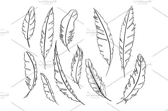 Feather Bird Line Sketch Set Vector