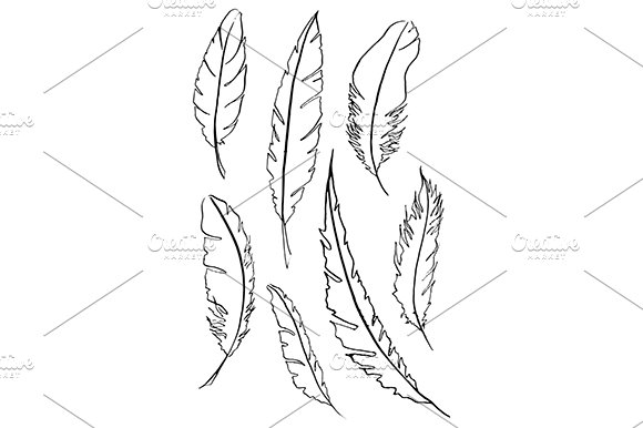Feather Bird Line Sketch Set Vector