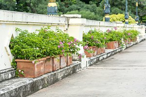 row of flower pot