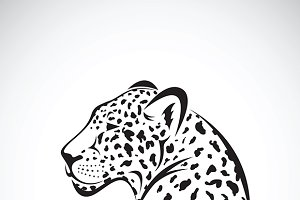 Vector of a leopard. Wild Animals.