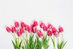 Top view of pink tulips in row