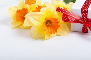 Bouqet of daffodils with gift box