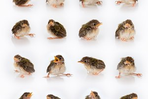 birdy mix