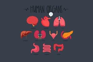 10 Human Organs