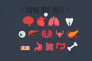 14 Human body parts