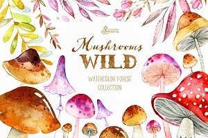 Wild Mushrooms. Forest Collection