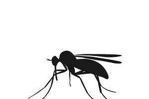 icon of mosquito, vector