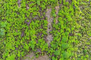 green leaf in agricultural