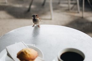 Coffee with muffin and a sparrow