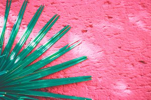 Green palm leaf on pink wall
