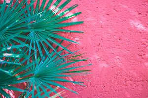 Palm leaf against bright pink wall