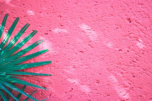 Tropical palm against pink wall