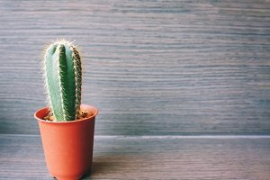Close up of small cactus