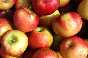 Bushel of Fresh Picked Apples