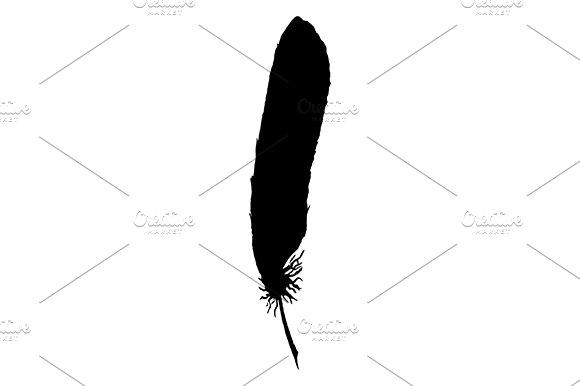 Feather Bird Line Art Sketch Vector