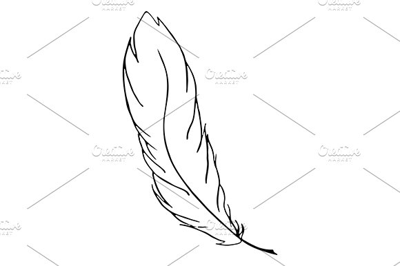 Line Art Feather : Feather bird line art sketch vector illustrations