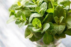Fresh mint leaves herb