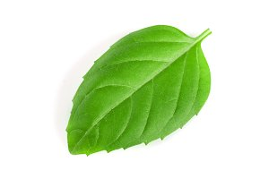 basil herb leaf isolated on white background closeup