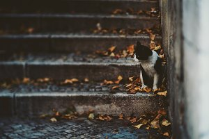 Small cat on stairway