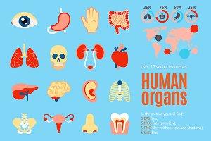 Human Organs Flat Set