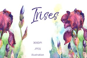 SALE! Watercolor irises flowers