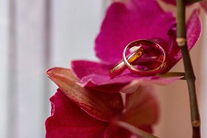 Rich wedding rings over pink flower