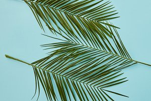 Palm leaves on blue background