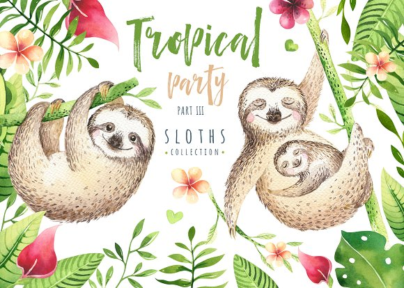 Tropical party III. Sloth collection